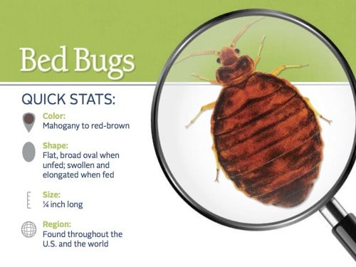 Bed Bug fast facts
